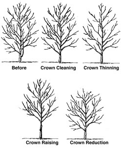 Proper Pruning Tree Service