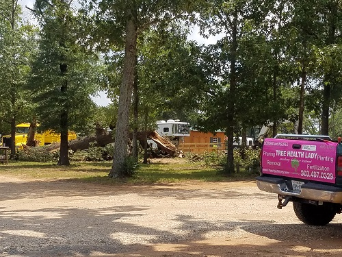 Bossier emergency tree removal