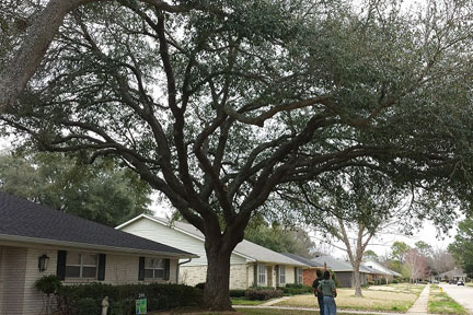 Shreveport Tree Service & Tree Health