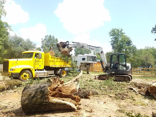Tree debris removal